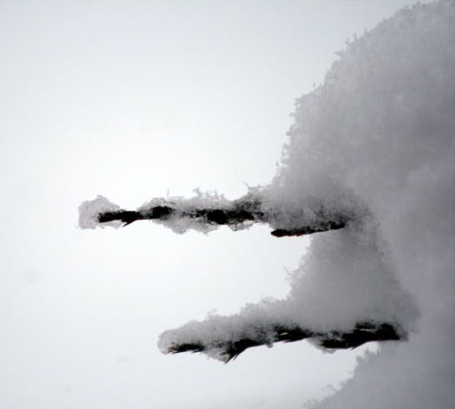 snow_IMG_0791